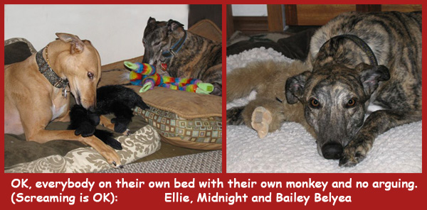 Ellie, Midnight, and Bailey Belyea